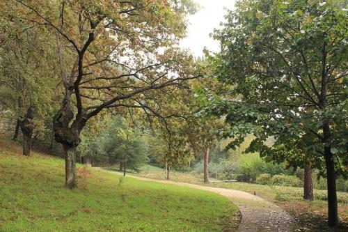 bosque neoturf